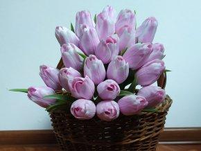 Tulipán bílo levandulový