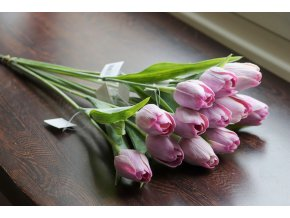 Tulipán levandulový