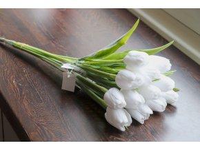 Tulipán bílý