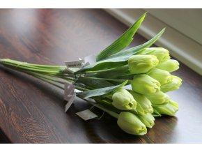 Tulipán zelený
