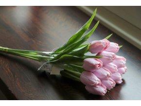 Tulipán pudrový