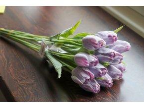 Tulipán fialovo bílý
