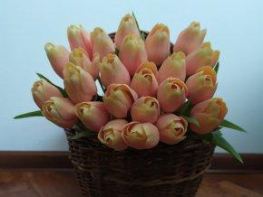 Tulipán broskvově oranžový