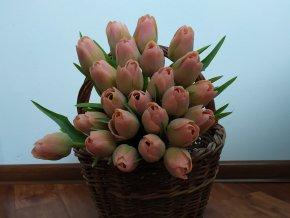 Tulipán broskvově zelený
