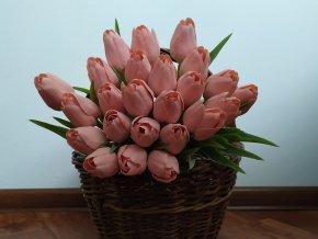 Tulipán lososovo zelený