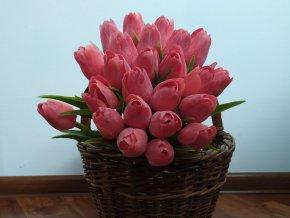 Tulipán Červený
