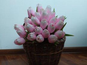 Tulipán bílo růžový