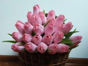 Tulipán bílo narůžovělý