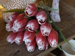 Tulipán červeno bílý