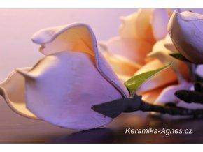 Magnolie větev