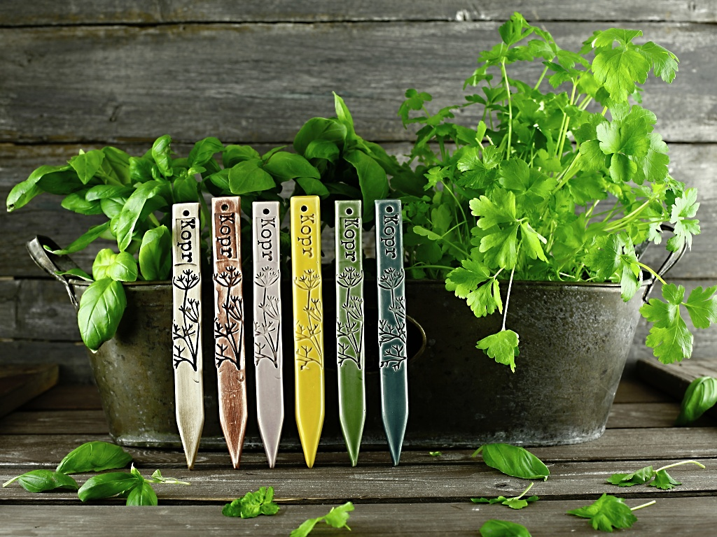 Zápich na bylinky dill