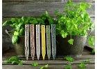 Zápich na bylinky bear´s garlic