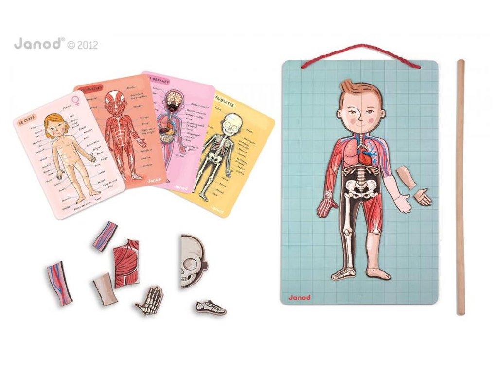 J05491 Magneticka skladacka Ludske telo svaly kostra organy Bodymagnet Janod od 7 rokov a