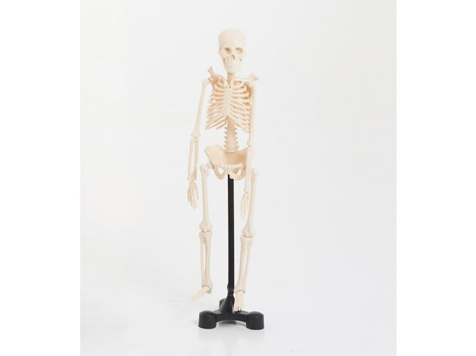 Kostra malá (Mini skeleton 46cm)