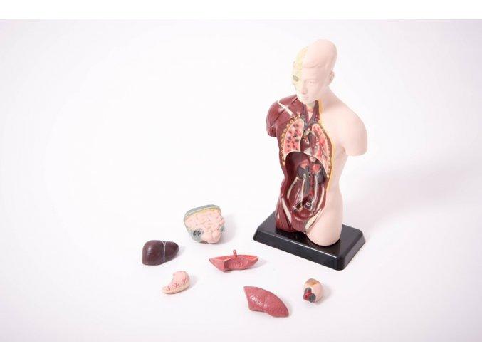 Anatomický set malý (Anatomy set with stand)