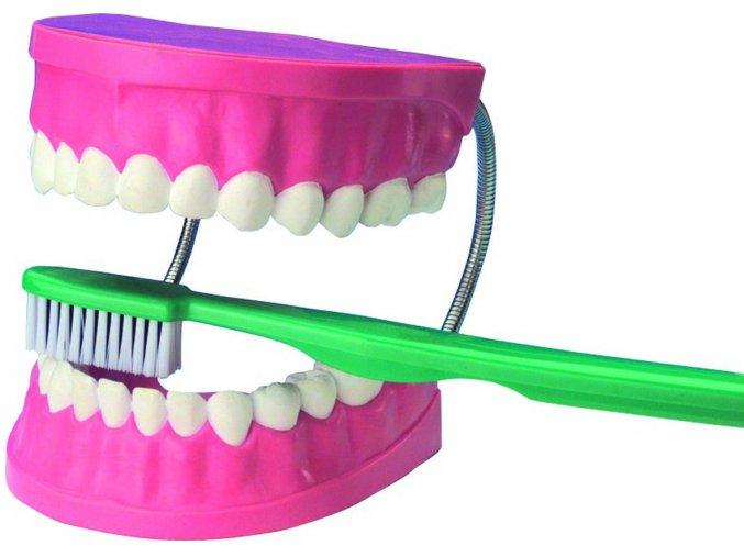 Velký model pro dentální péči / Giant Dental Care Model
