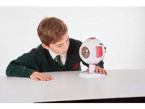 Lidské oko (Human eye)
