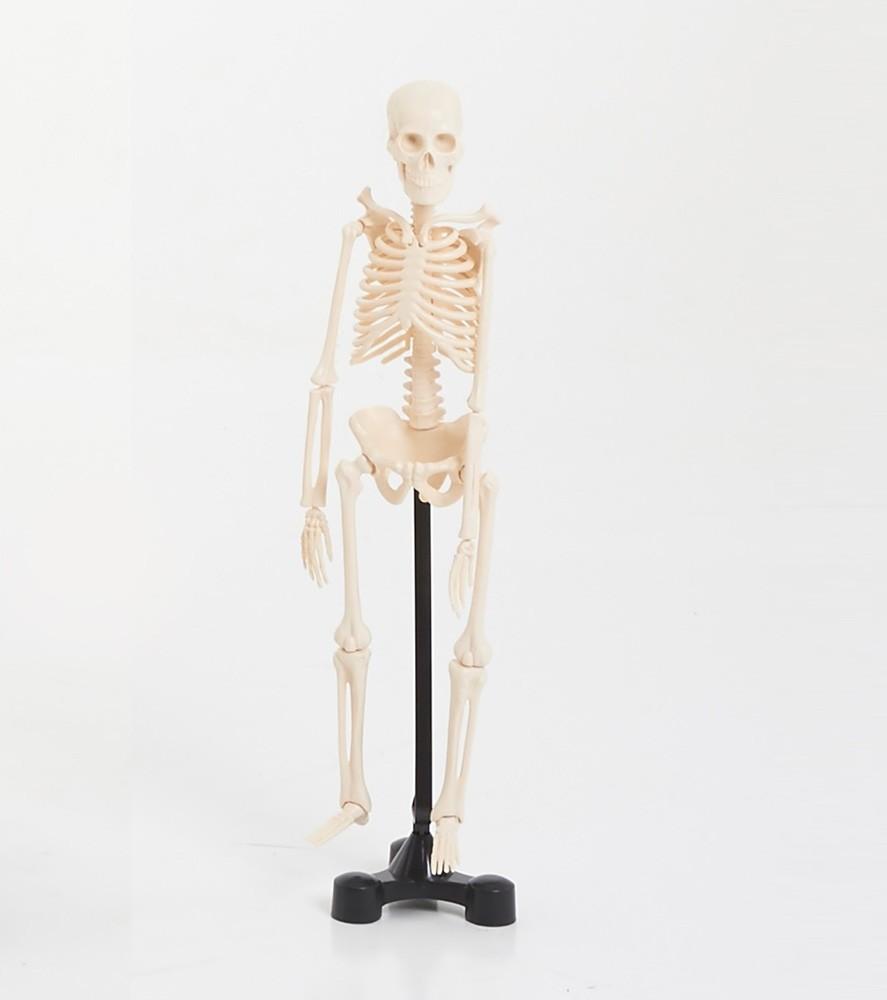 Levně EDU-QI Kostra malá (Mini skeleton 46cm)