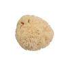 139149 prirodni morska myci houba s97399