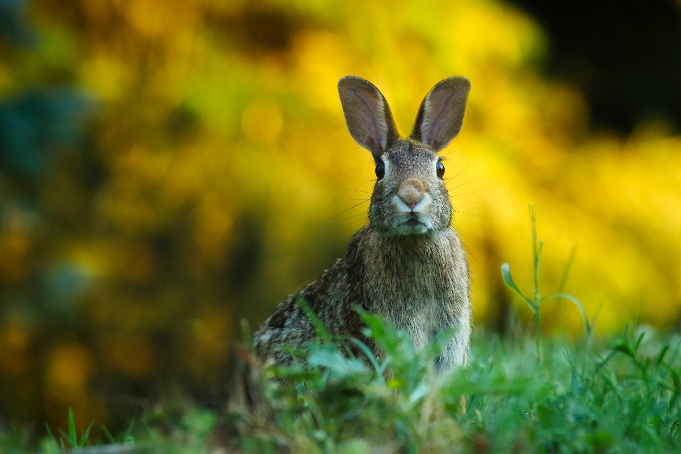 close-up-of-rabbit-on-field-247373
