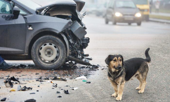 Co se stane s Vašim psem při autonehodě? Pusťte si názorné video.