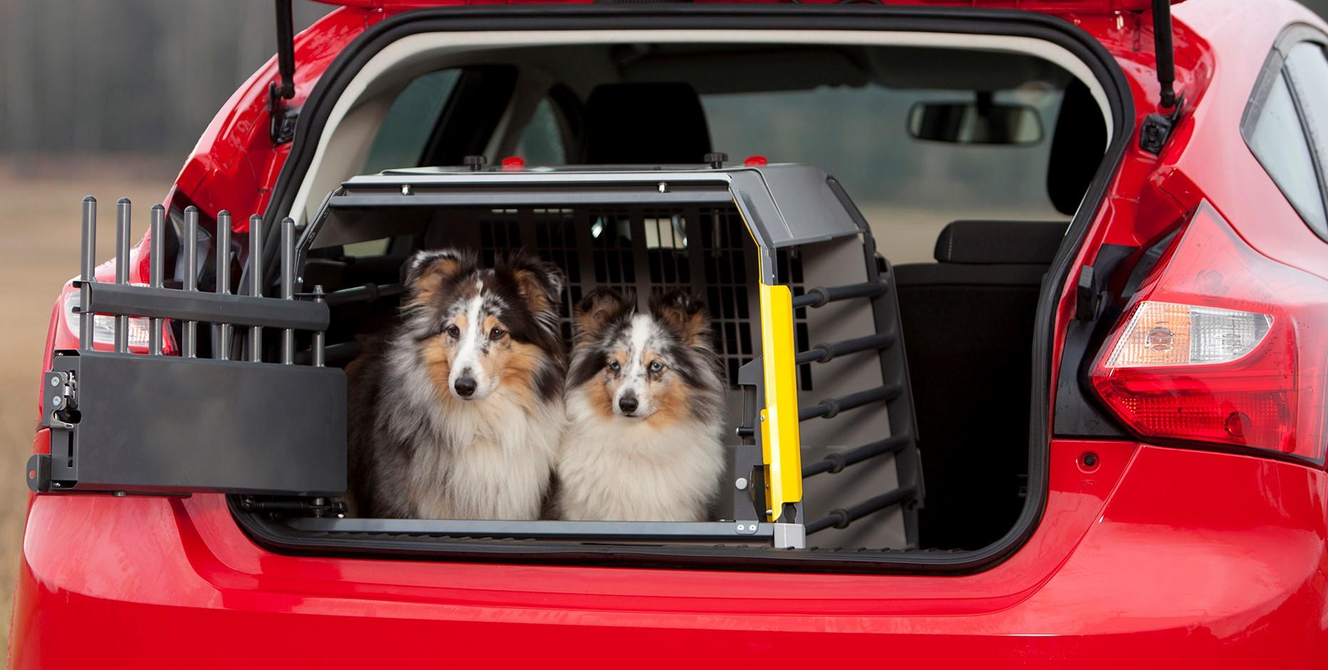 Cestování se psem. Zvykne si vůbec na klec?