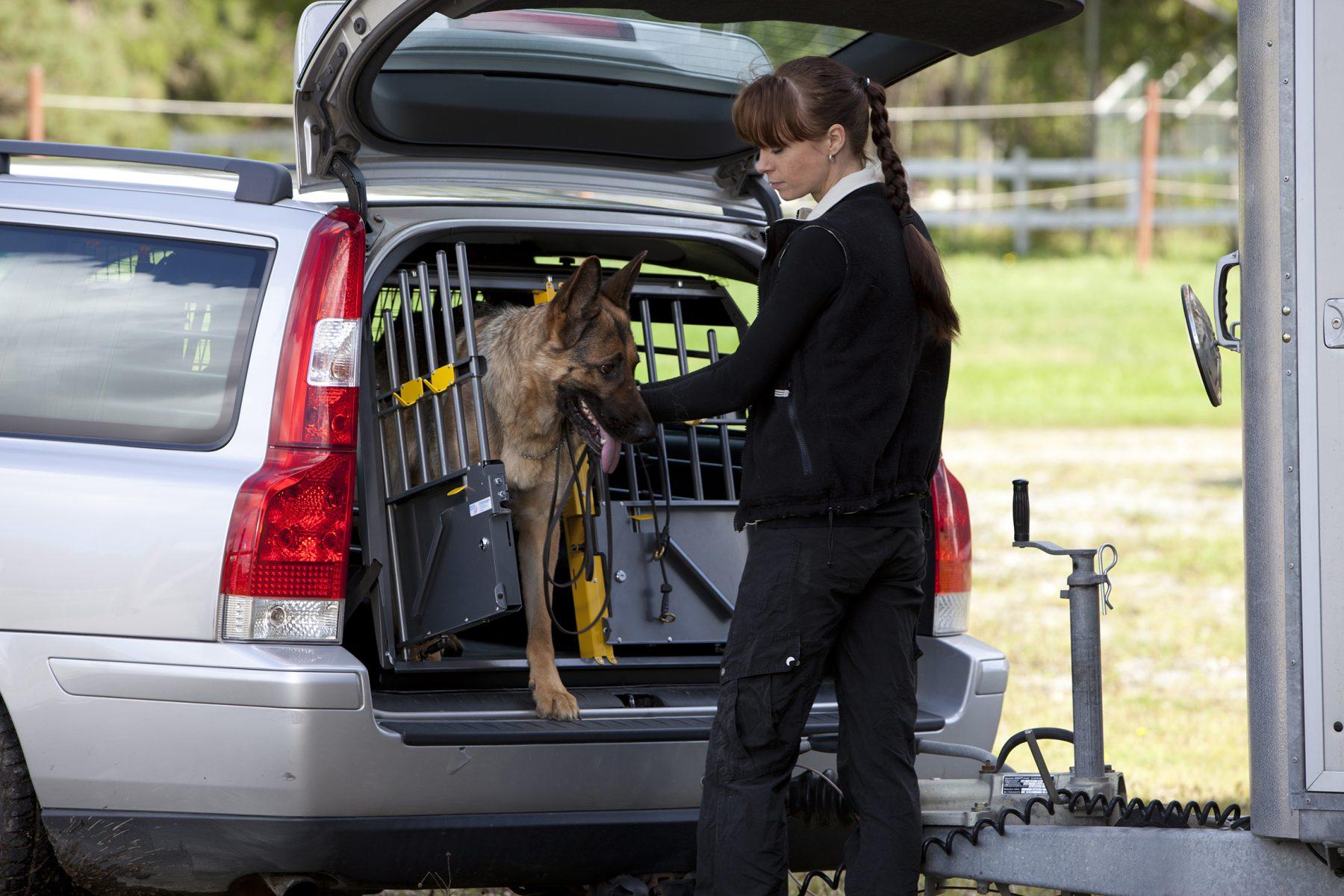 Dogtrainer_summer_horsetrailer_dog_00364_200X130mm_print-1800x1200