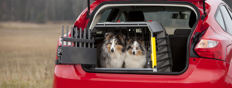 Cestovanie so psom. Zvykne si vôbec na klietku?