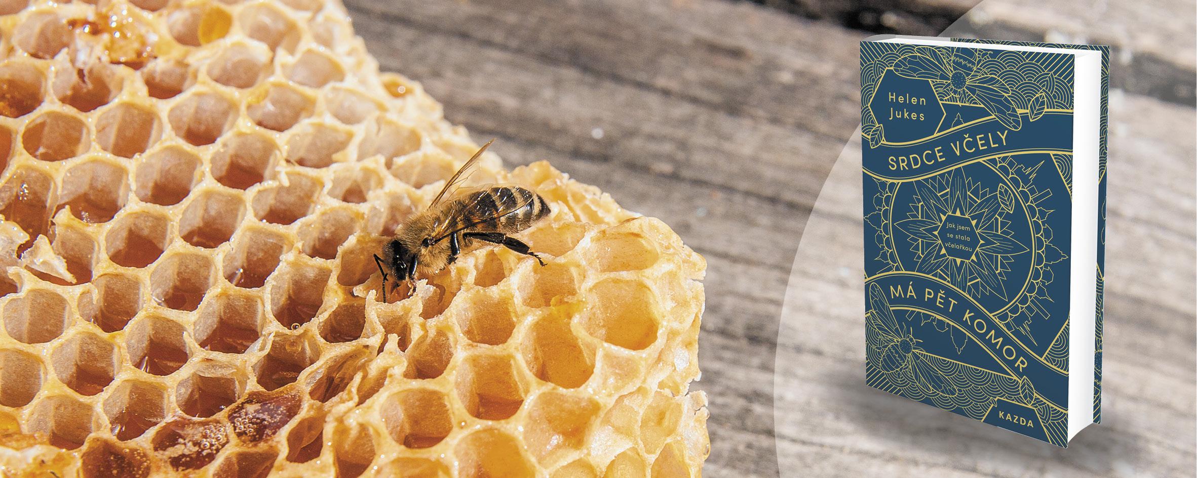 Srdce včely má pět komor