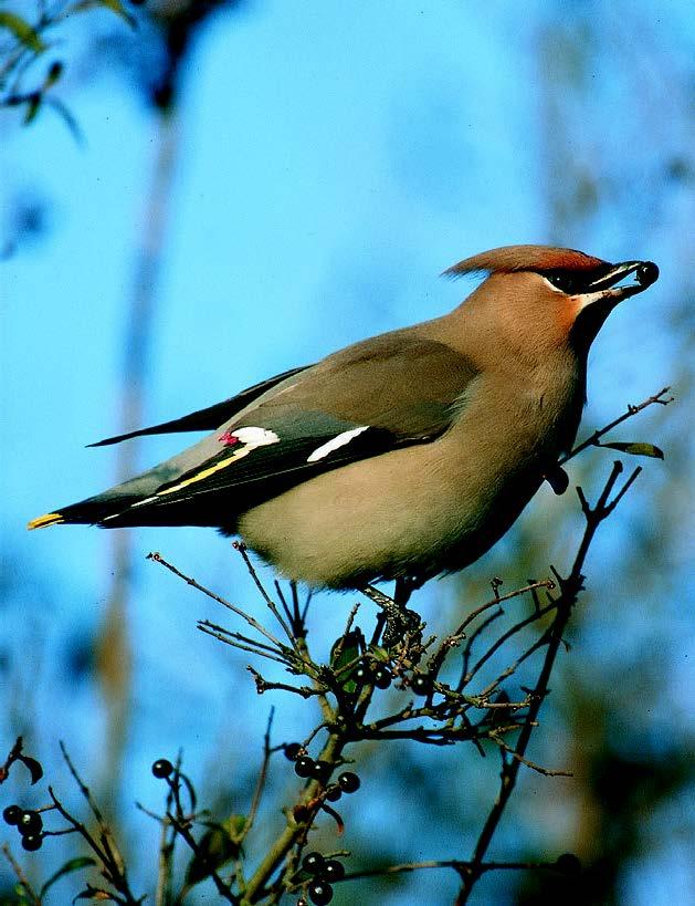 ptaci2