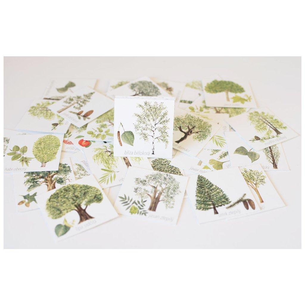 6237 pexeso stromy