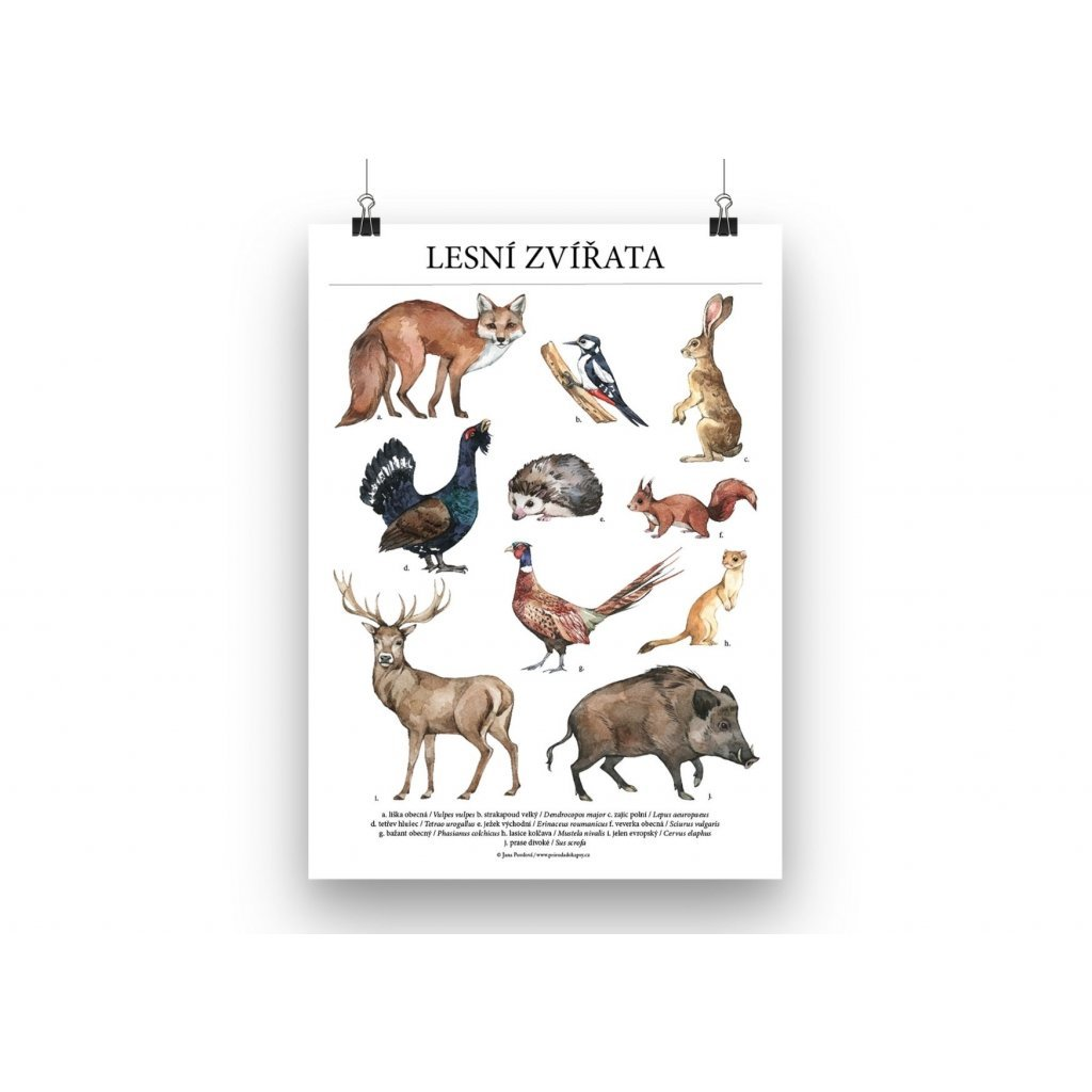 Plakát lesní zvířata