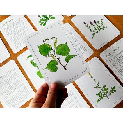 lecive rostliny