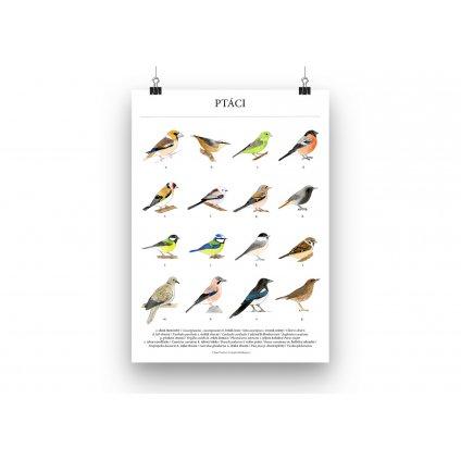 Ptaci plakat mockup