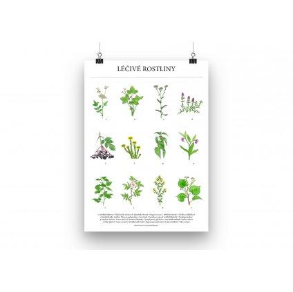 Lecive rostliny plakat mockup