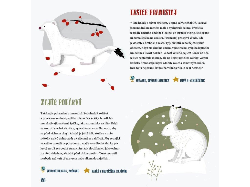 Zima ve světě zvířat