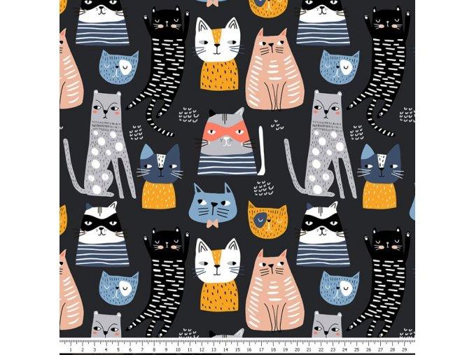 kočky01