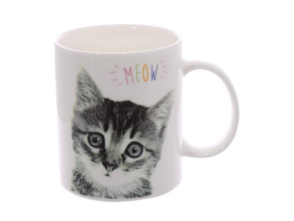hrnek kočka kotě