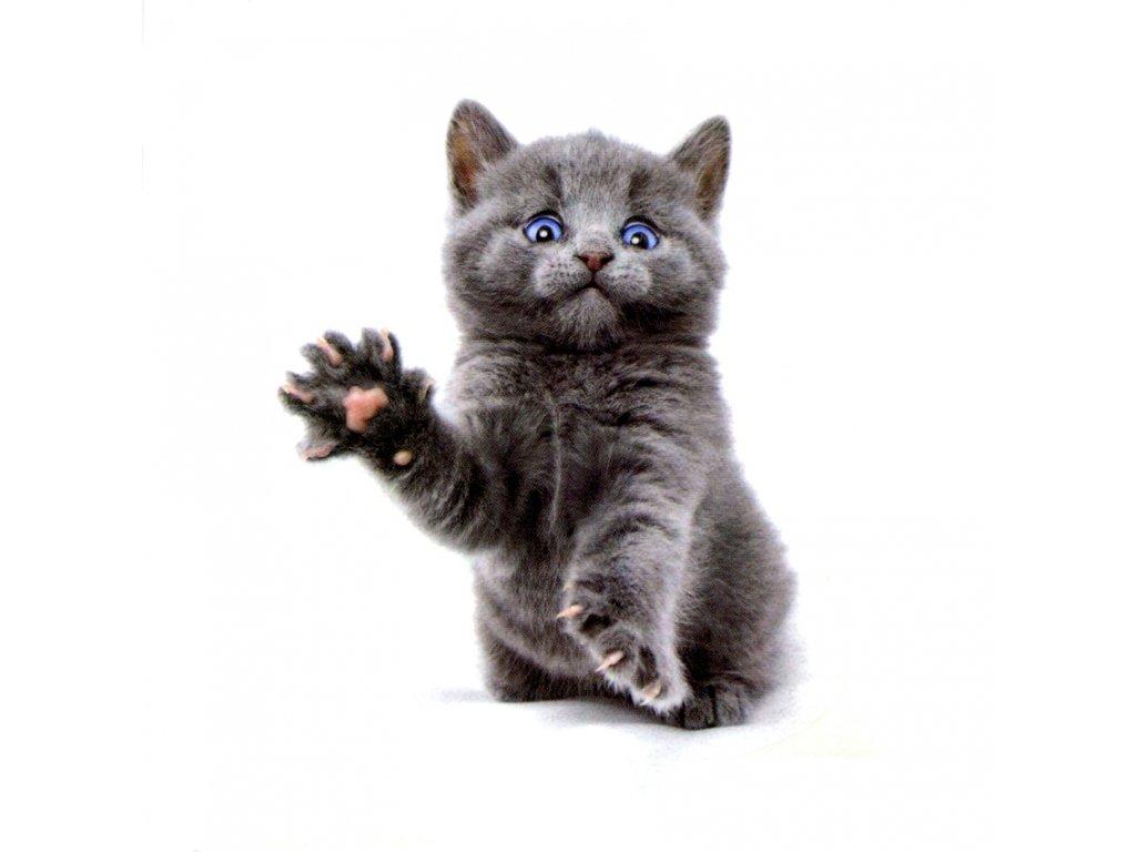 kočka kotě tetování tetovačka