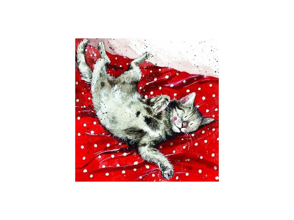 přání kočka kočky kočičí kotě Alex Clark blahopřání 2