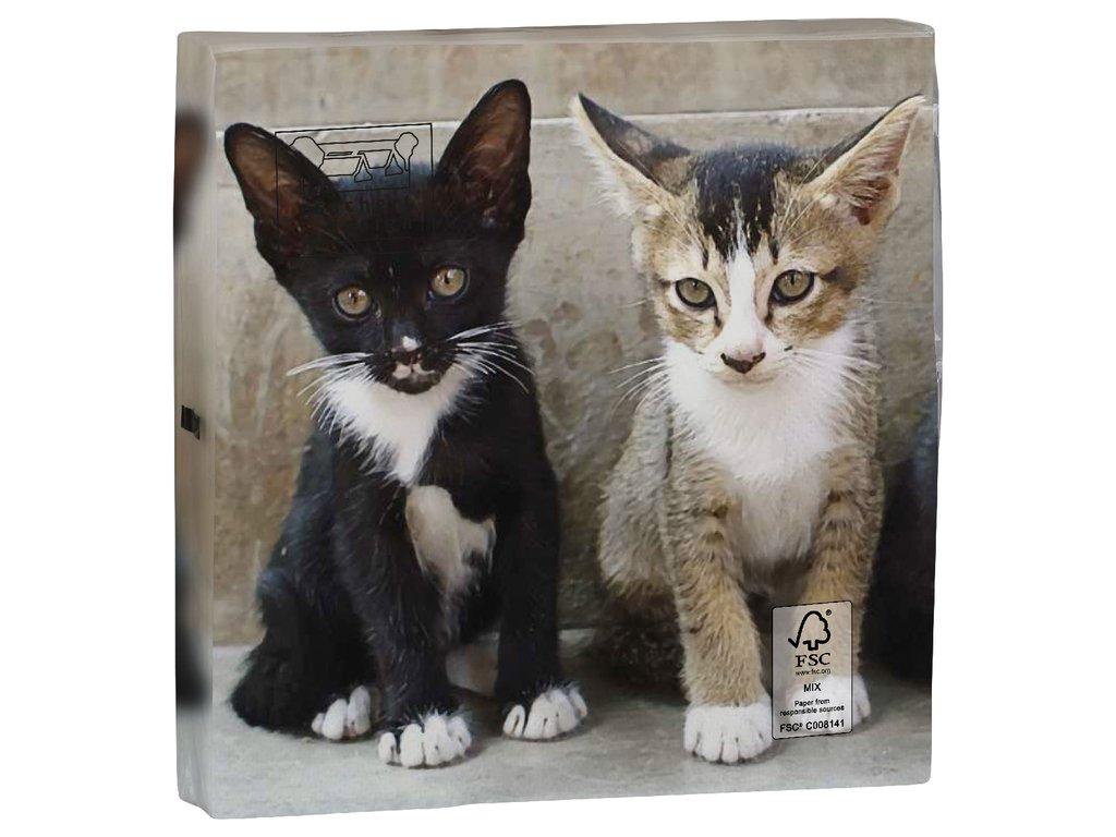 ubrousky kočka s kočkou kočičí kotě s kotětem 4