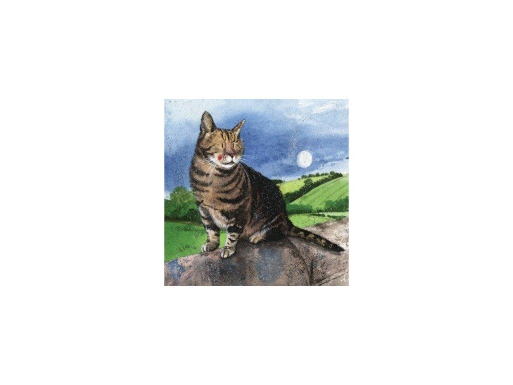přání blahopřání kočka s kočku kočičíí alex clark