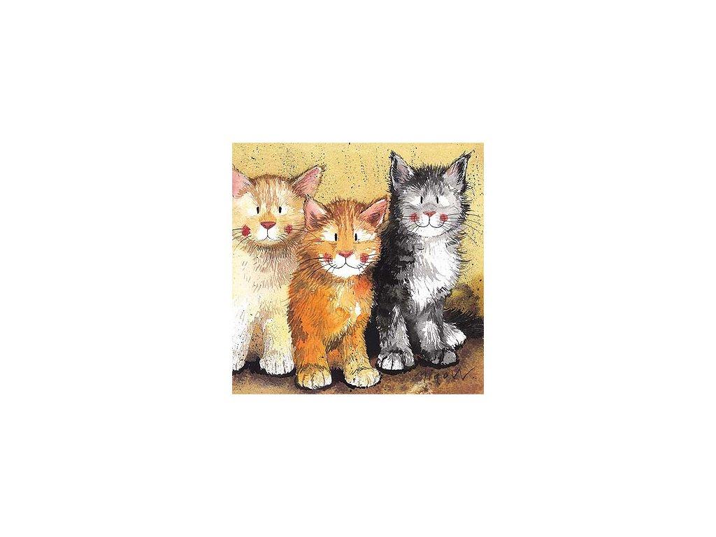 přání blahopřání tři kočouři kočka s kočkou kočičí Alex Clark