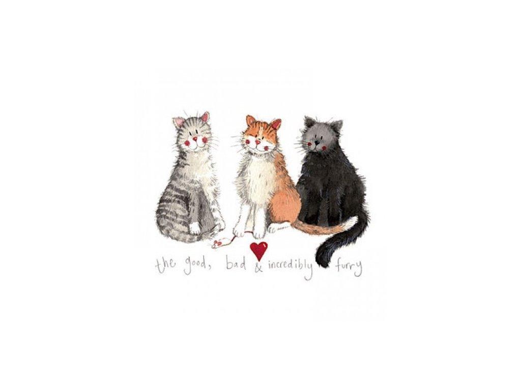 blahopřání přání kočka s kočkou kočičí