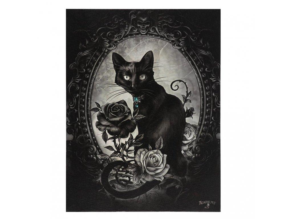 obraz kočka s kočkou kočičí gotický
