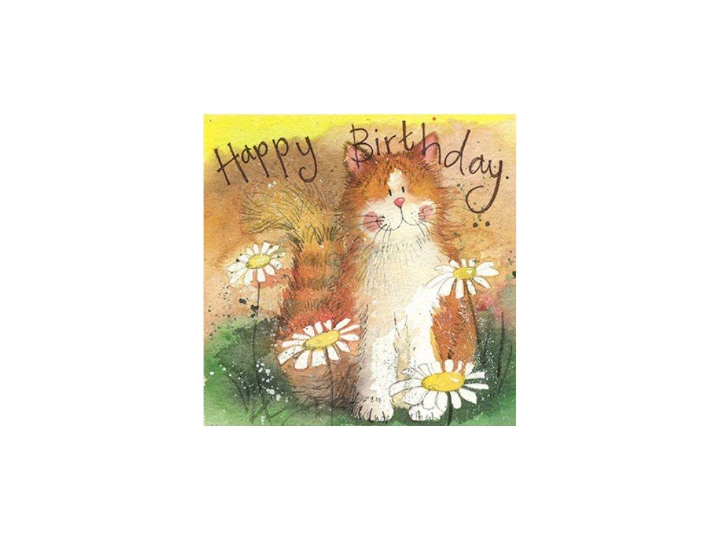 narozeninové přání kočka s kočkou kočíčí alex clark