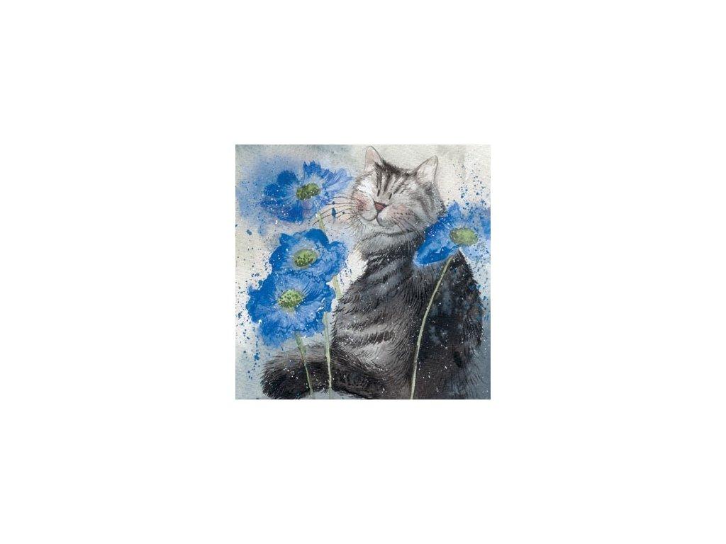 přání blahopřání kočka s kočkou kočičí modrá alex clark