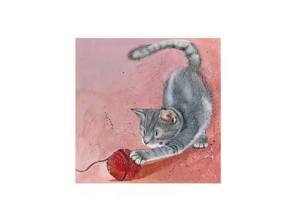 blahopřání přání kočka s kočkou kočičí klubíčko kotě Alex Clark