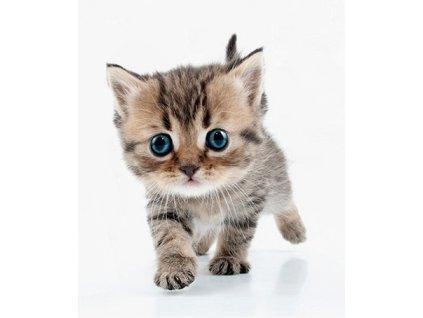 Velká samolepka kočka V