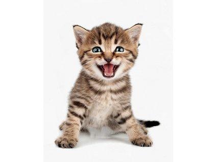 Velká samolepka kočka VI